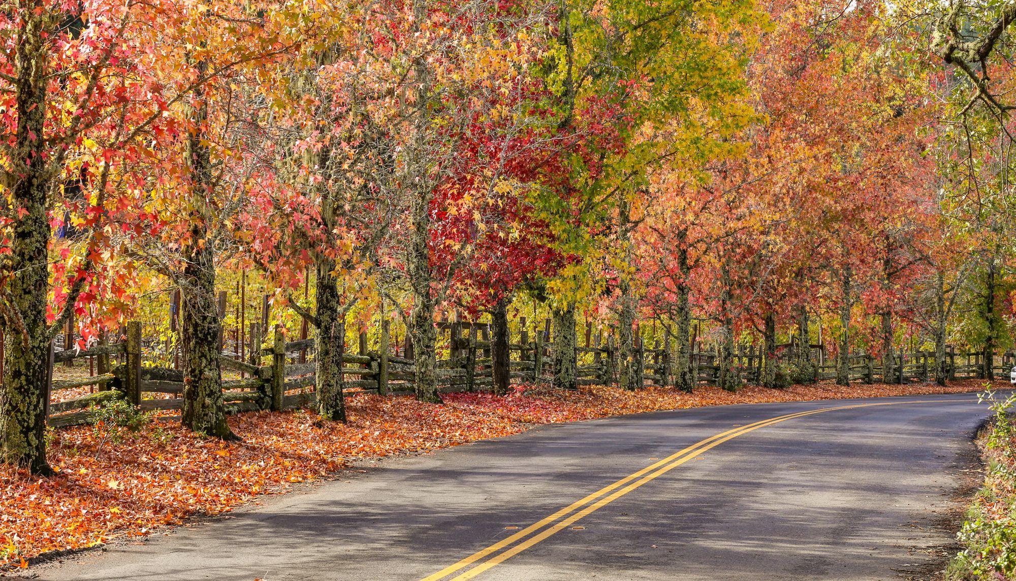 Bike Path in Michigan in the fall