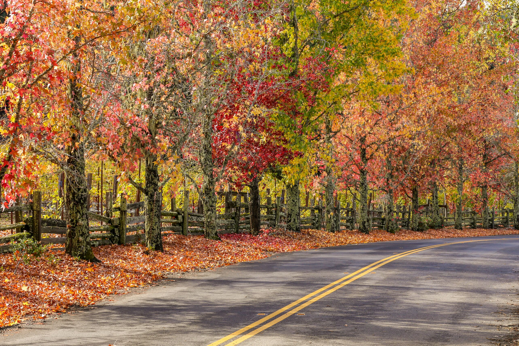 5 Ways to Experience Michigan's Fall Color Tour