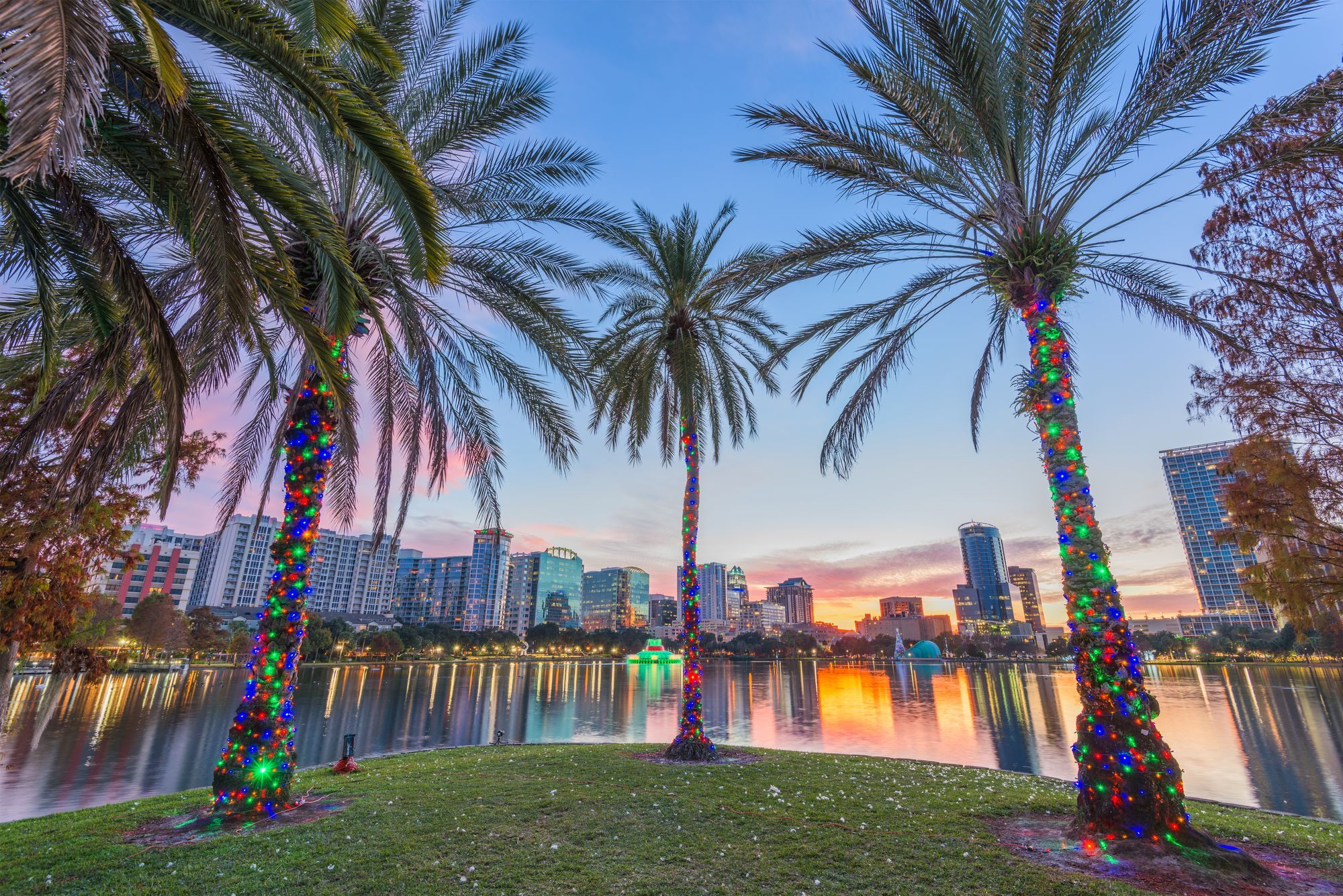 Florida palm trees decorated for Christmas